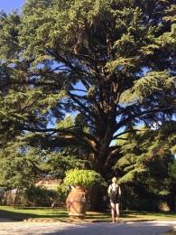 Orto botanico - Lucca