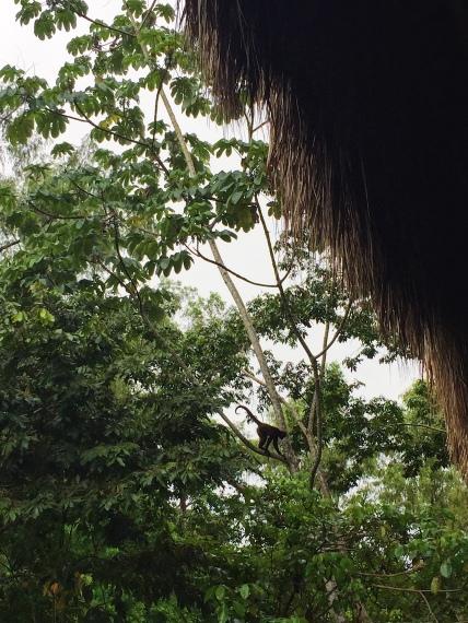 Vivre au milieu des singes